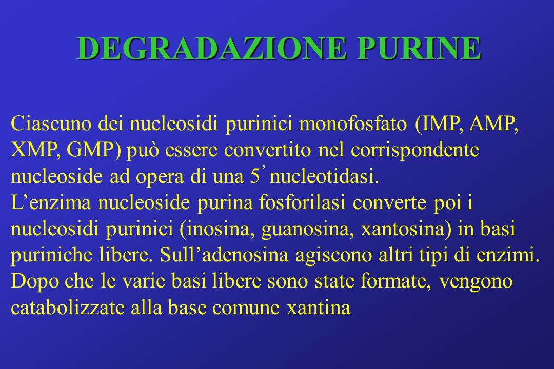 DEGRADAZIONE PURINE Ciascuno dei nucleosidi purinici monofosfato (IMP, AMP, XMP, GMP) può essere convertito nel corrispondente nucleoside ad opera di una 5 ' nucleotidasi.