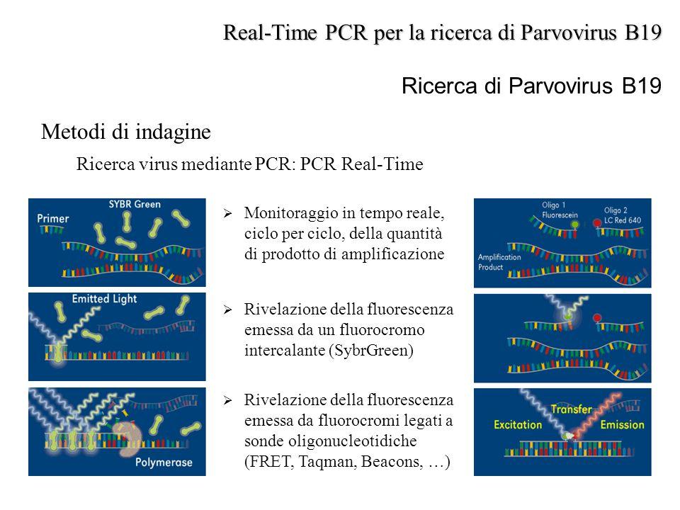 Metodi di indagine Ricerca virus mediante PCR: PCR Real-Time  Rivelazione della fluorescenza emessa da un fluorocromo intercalante (SybrGreen)  Rive