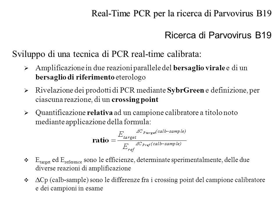 Ricerca di Parvovirus B19 Sviluppo di una tecnica di PCR real-time calibrata:  Amplificazione in due reazioni parallele del bersaglio virale e di un
