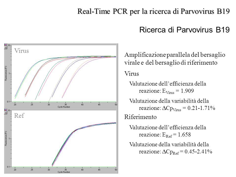 Ricerca di Parvovirus B19 Virus Ref Amplificazione parallela del bersaglio virale e del bersaglio di riferimento Virus Valutazione dell'efficienza del