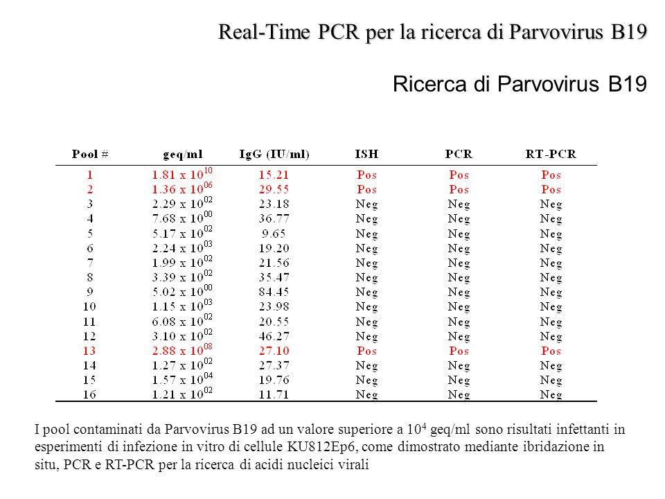 Ricerca di Parvovirus B19 I pool contaminati da Parvovirus B19 ad un valore superiore a 10 4 geq/ml sono risultati infettanti in esperimenti di infezi