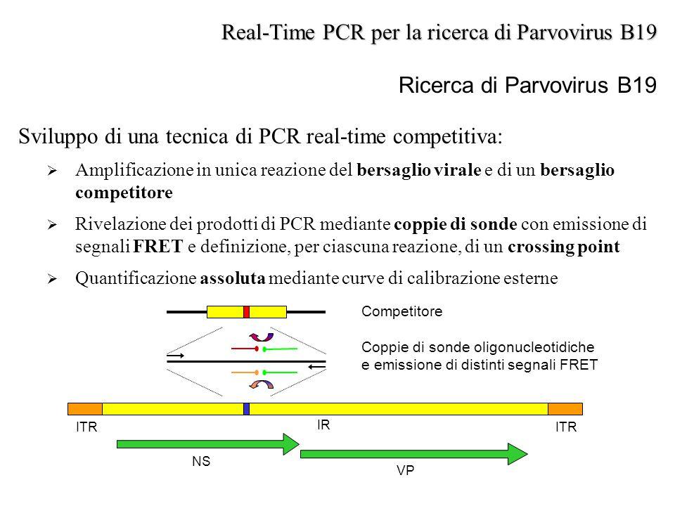 Sviluppo di una tecnica di PCR real-time competitiva:  Amplificazione in unica reazione del bersaglio virale e di un bersaglio competitore  Rivelazi