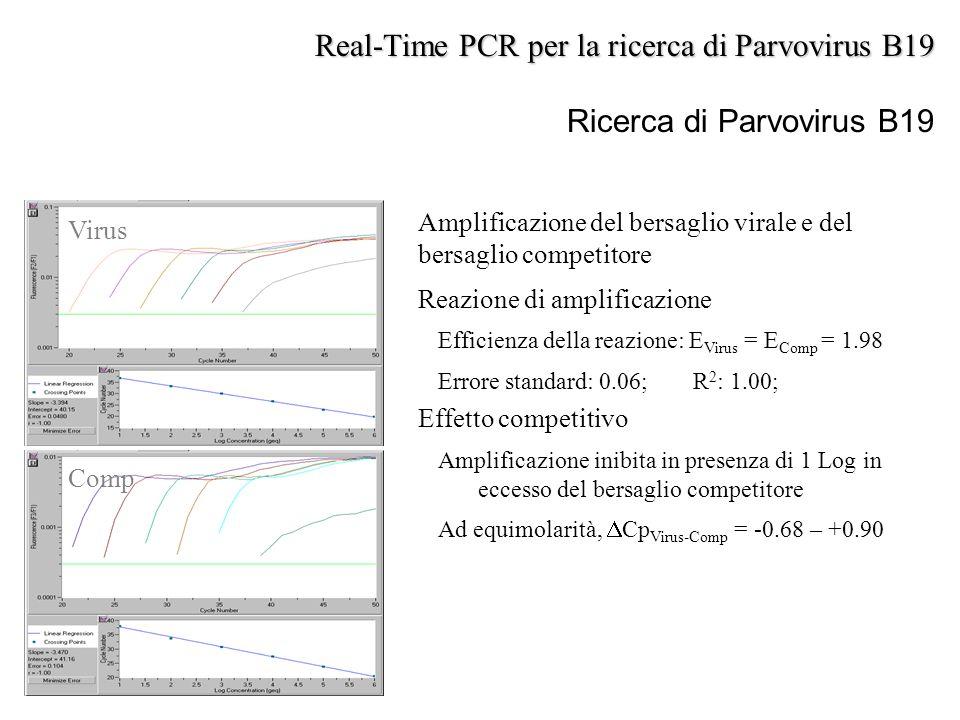Virus Comp Real-Time PCR per la ricerca di Parvovirus B19 Ricerca di Parvovirus B19 Amplificazione del bersaglio virale e del bersaglio competitore Re
