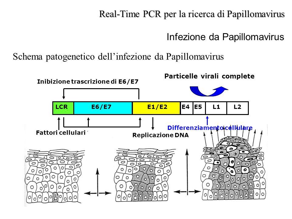 Infezione da Papillomavirus Schema patogenetico dell'infezione da Papillomavirus Real-Time PCR per la ricerca di Papillomavirus LCRE6/E7E1/E2E4E5L1L2