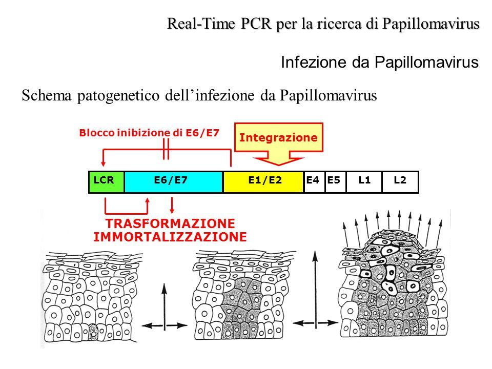Infezione da Papillomavirus Schema patogenetico dell'infezione da Papillomavirus Real-Time PCR per la ricerca di Papillomavirus TRASFORMAZIONE IMMORTA