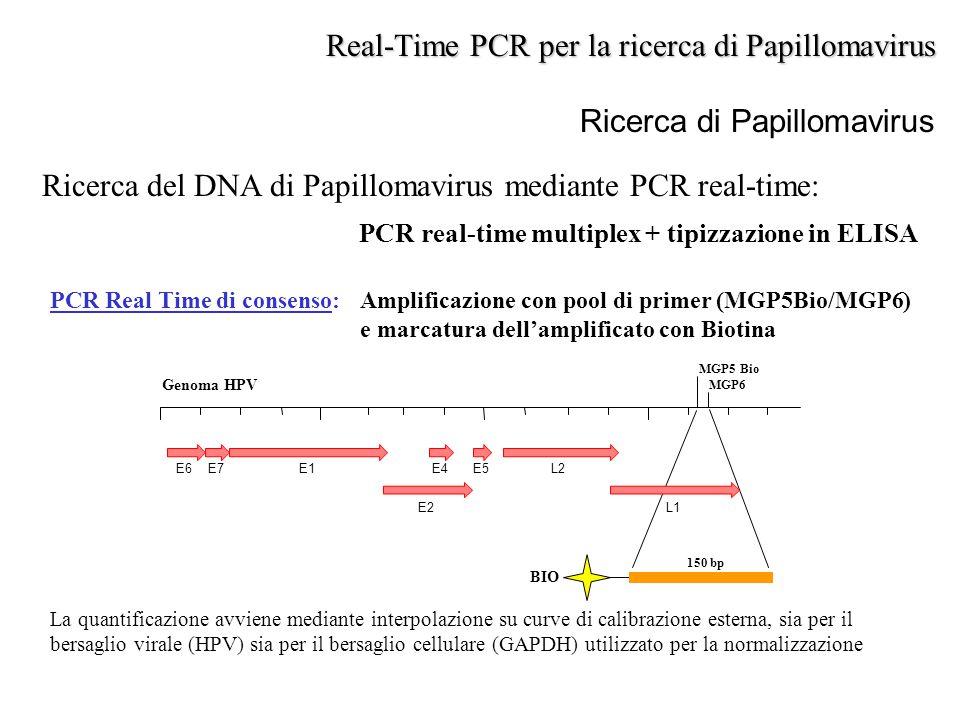 Ricerca di Papillomavirus Ricerca del DNA di Papillomavirus mediante PCR real-time: PCR real-time multiplex + tipizzazione in ELISA Real-Time PCR per