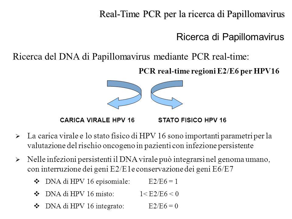 Ricerca di Papillomavirus Ricerca del DNA di Papillomavirus mediante PCR real-time: PCR real-time regioni E2/E6 per HPV16 Real-Time PCR per la ricerca