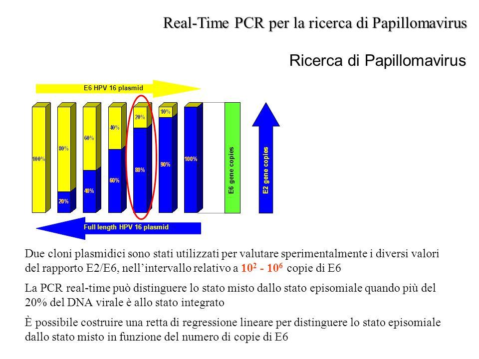 Ricerca di Papillomavirus Real-Time PCR per la ricerca di Papillomavirus E6 HPV 16 plasmid Full length HPV 16 plasmid E2 gene copies E6 gene copies Du