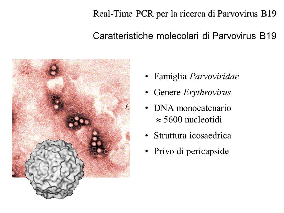 Famiglia Parvoviridae Genere Erythrovirus DNA monocatenario  5600 nucleotidi Struttura icosaedrica Privo di pericapside Real-Time PCR per la ricerca