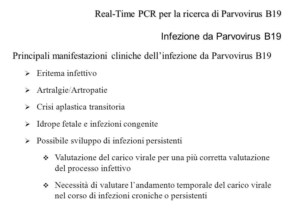 Principali manifestazioni cliniche dell'infezione da Parvovirus B19  Eritema infettivo  Artralgie/Artropatie  Crisi aplastica transitoria  Idrope