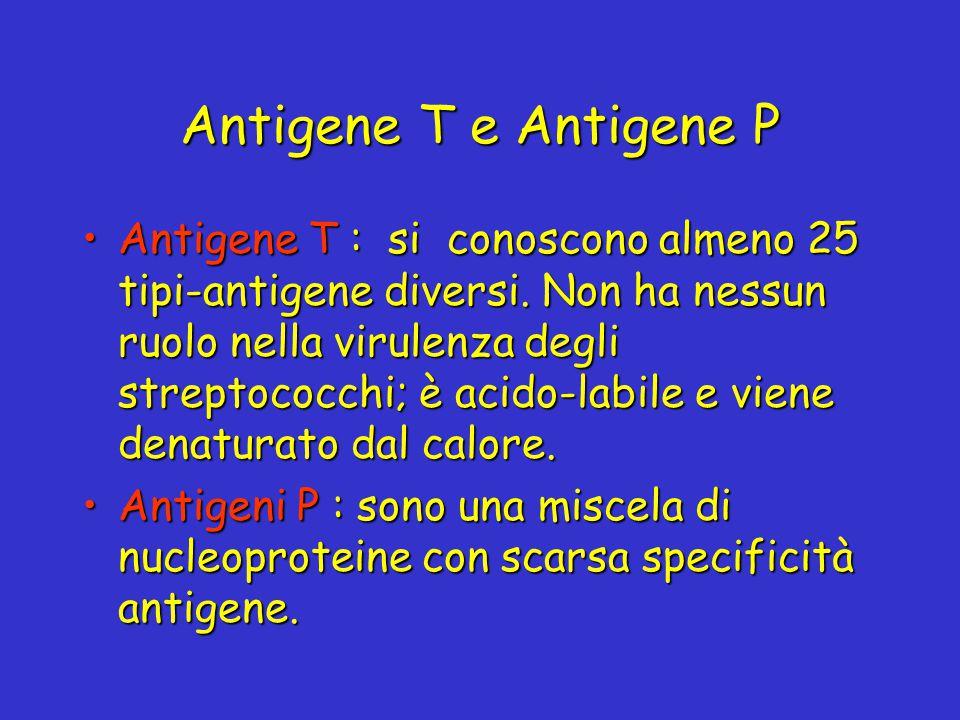 Antigene T e Antigene P Antigene T : si conoscono almeno 25 tipi-antigene diversi. Non ha nessun ruolo nella virulenza degli streptococchi; è acido-la