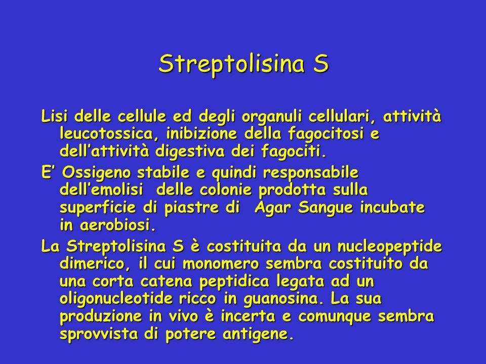 Streptolisina S Lisi delle cellule ed degli organuli cellulari, attività leucotossica, inibizione della fagocitosi e dell'attività digestiva dei fagoc