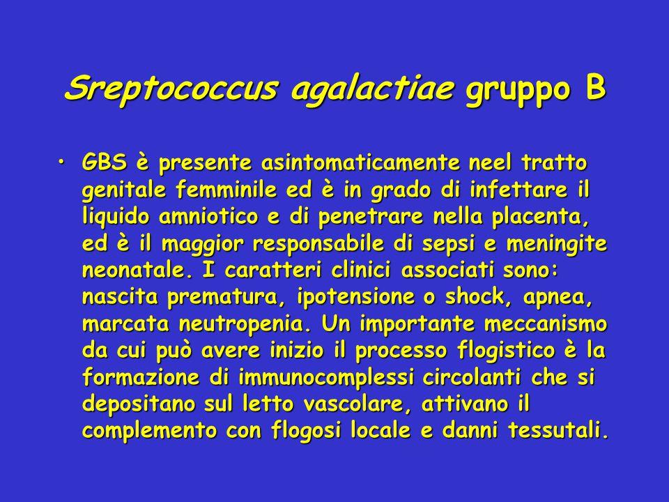Sreptococcus agalactiae gruppo B GBS è presente asintomaticamente neel tratto genitale femminile ed è in grado di infettare il liquido amniotico e di