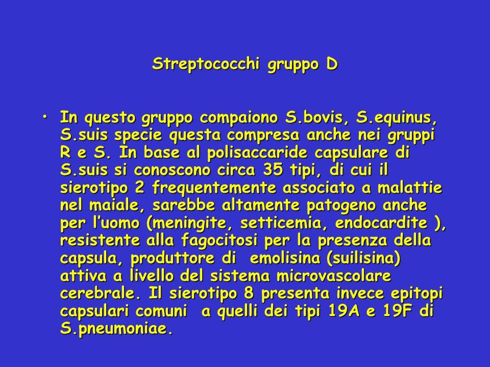 Streptococchi gruppo D In questo gruppo compaiono S.bovis, S.equinus, S.suis specie questa compresa anche nei gruppi R e S. In base al polisaccaride c