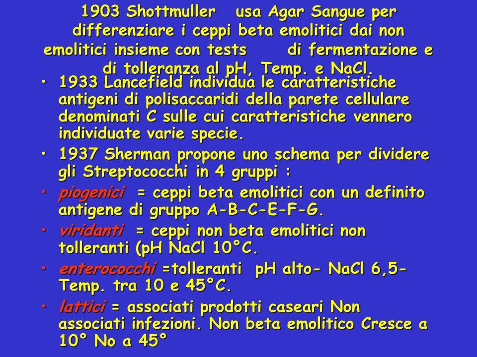 1903 Shottmuller usa Agar Sangue per differenziare i ceppi beta emolitici dai non emolitici insieme con tests di fermentazione e di tolleranza al pH,