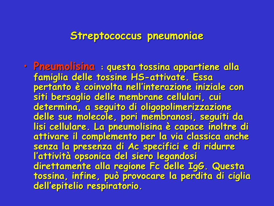 Streptococcus pneumoniae Pneumolisina : questa tossina appartiene alla famiglia delle tossine HS-attivate. Essa pertanto è coinvolta nell'interazione