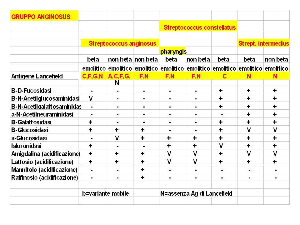 Virulence Factors S.