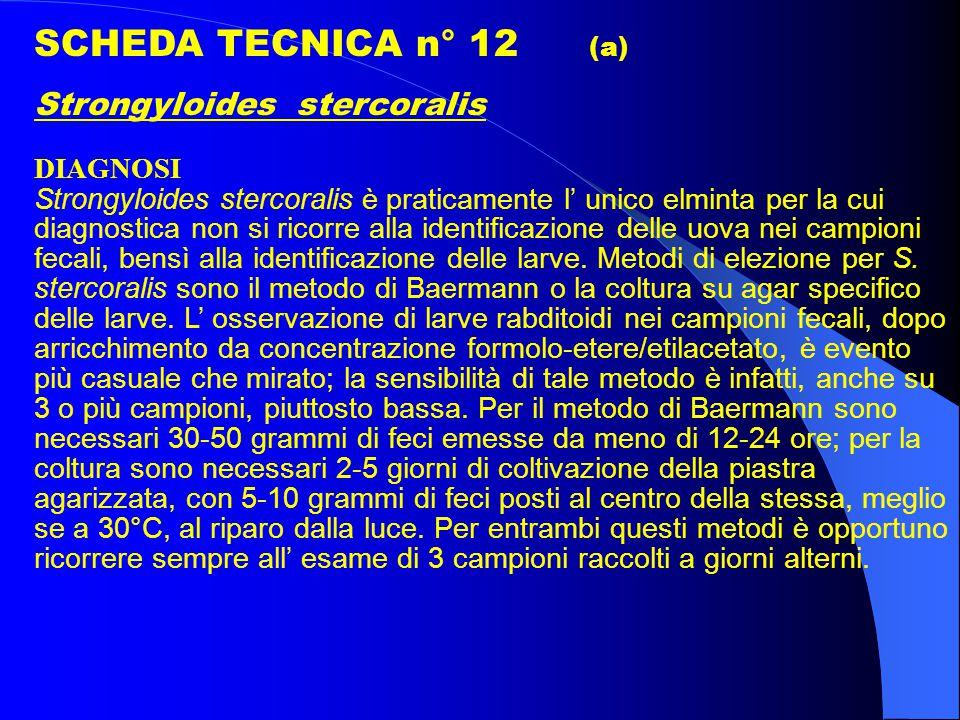 SCHEDA TECNICA n° 12 (a) Strongyloides stercoralis DIAGNOSI Strongyloides stercoralis è praticamente l' unico elminta per la cui diagnostica non si ricorre alla identificazione delle uova nei campioni fecali, bensì alla identificazione delle larve.