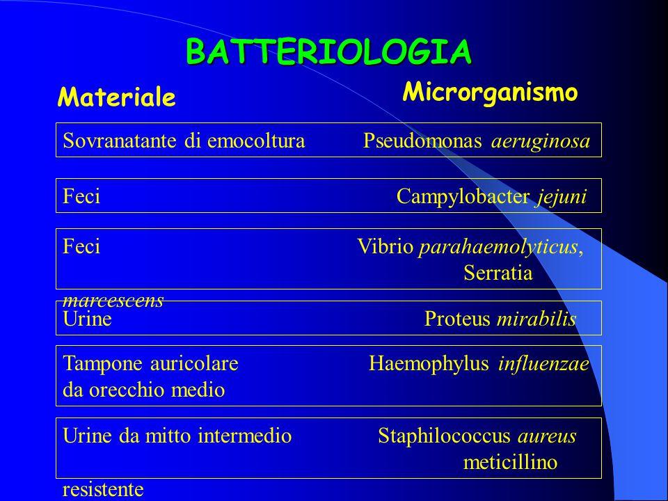 BATTERIOLOGIA Materiale Microrganismo Sovranatante di emocoltura Pseudomonas aeruginosa FeciCampylobacter jejuni Feci Vibrio parahaemolyticus, Serrati