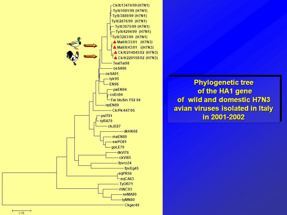 Phylogenetic tree of the HA1 gene of the HA1 gene of wild and domestic H7N3 avian viruses isolated in Italy in 2001-2002 Phylogenetic tree of the HA1