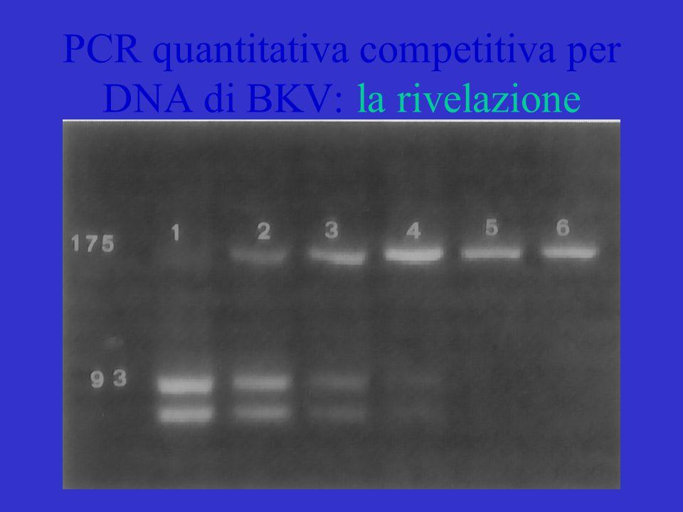 PCR quantitativa competitiva per DNA di BKV: la rivelazione