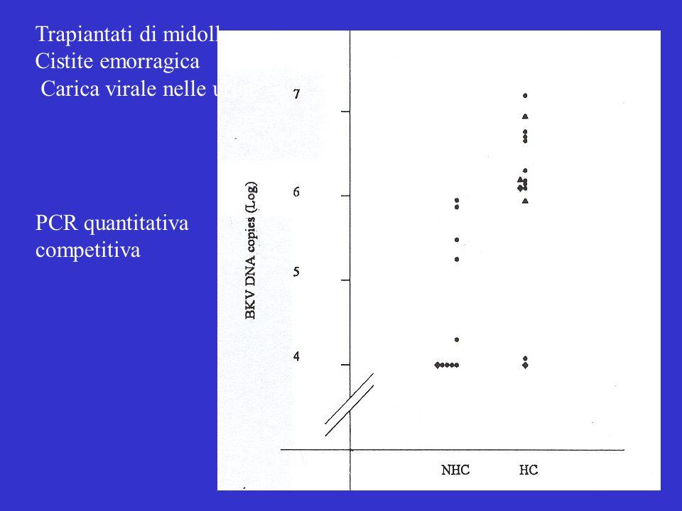 Trapiantati di midollo Cistite emorragica Carica virale nelle urine PCR quantitativa competitiva