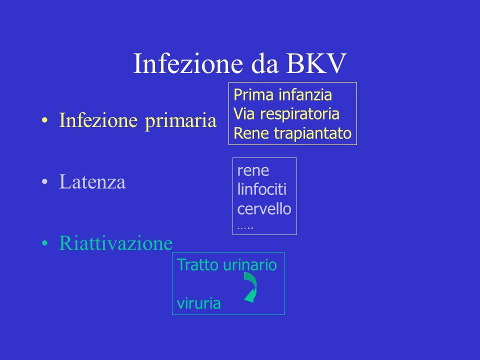 Infezione da BKV Infezione primaria Latenza Riattivazione Prima infanzia Via respiratoria Rene trapiantato rene linfociti cervello ….. Tratto urinario