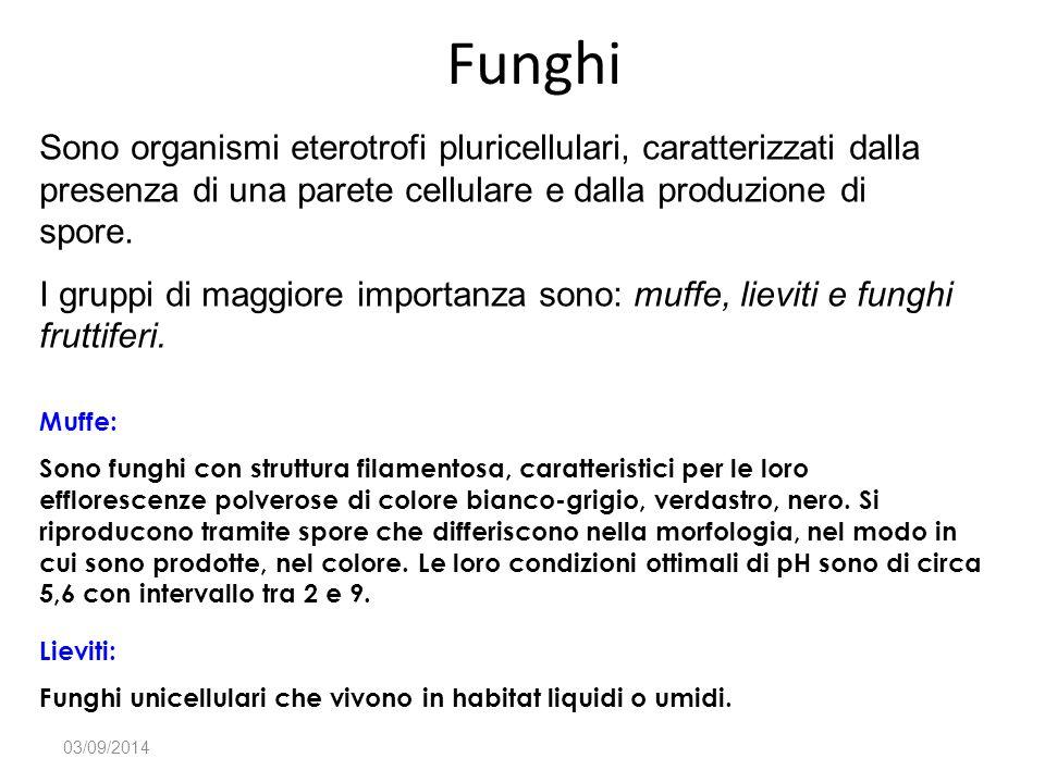 Funghi 03/09/2014 Muffe: Sono funghi con struttura filamentosa, caratteristici per le loro efflorescenze polverose di colore bianco-grigio, verdastro,