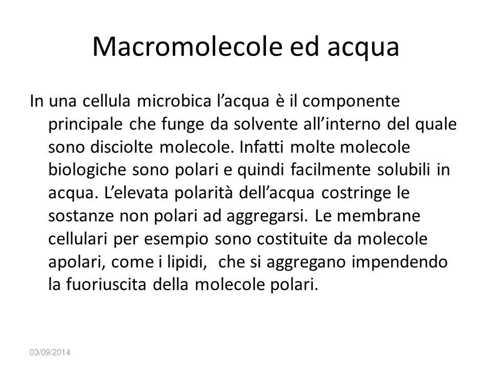 Macromolecole ed acqua In una cellula microbica l'acqua è il componente principale che funge da solvente all'interno del quale sono disciolte molecole