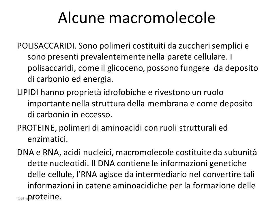 Alcune macromolecole POLISACCARIDI. Sono polimeri costituiti da zuccheri semplici e sono presenti prevalentemente nella parete cellulare. I polisaccar
