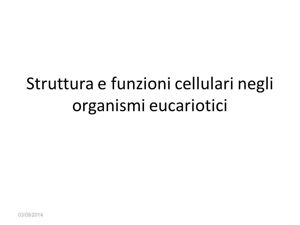 Struttura e funzioni cellulari negli organismi eucariotici 03/09/2014