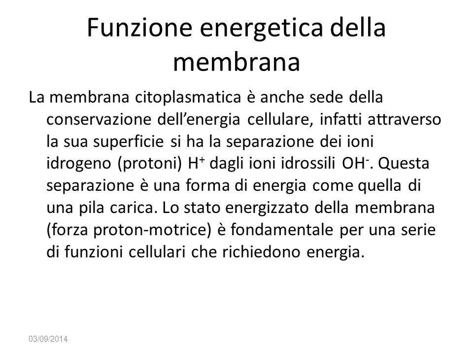 Funzione energetica della membrana La membrana citoplasmatica è anche sede della conservazione dell'energia cellulare, infatti attraverso la sua super