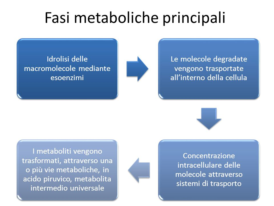 Fasi metaboliche principali 03/09/2014 Idrolisi delle macromolecole mediante esoenzimi Le molecole degradate vengono trasportate all'interno della cel