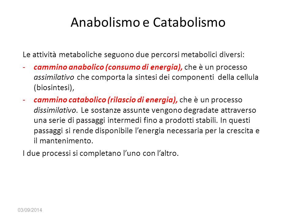 Anabolismo e Catabolismo Le attività metaboliche seguono due percorsi metabolici diversi: -cammino anabolico (consumo di energia), che è un processo a
