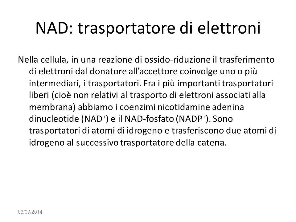 NAD: trasportatore di elettroni Nella cellula, in una reazione di ossido-riduzione il trasferimento di elettroni dal donatore all'accettore coinvolge