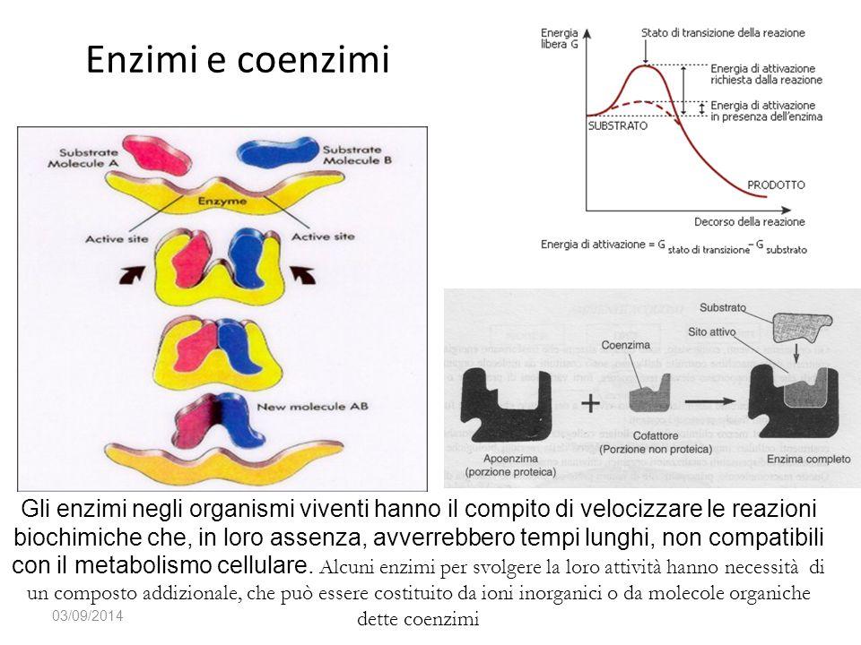 Enzimi e coenzimi 03/09/2014 Gli enzimi negli organismi viventi hanno il compito di velocizzare le reazioni biochimiche che, in loro assenza, avverreb
