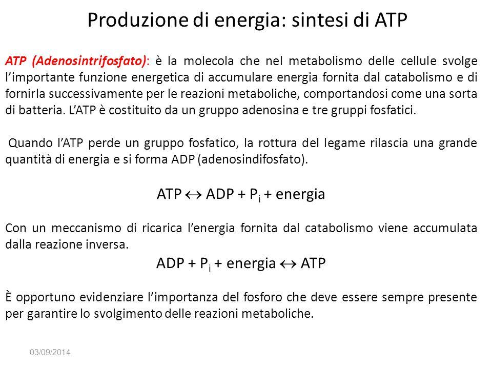 Produzione di energia: sintesi di ATP 03/09/2014 ATP (Adenosintrifosfato): è la molecola che nel metabolismo delle cellule svolge l'importante funzion