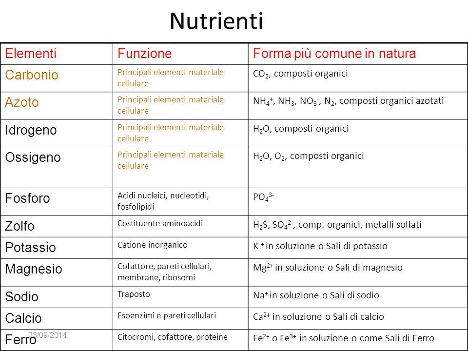 Nutrienti 03/09/2014 ElementiFunzioneForma più comune in natura Carbonio Principali elementi materiale cellulare CO 2, composti organici Azoto Princip