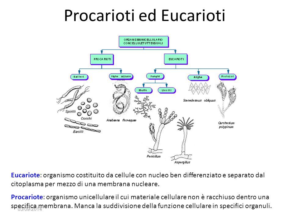 Procarioti ed Eucarioti 03/09/2014 Eucariote: organismo costituito da cellule con nucleo ben differenziato e separato dal citoplasma per mezzo di una