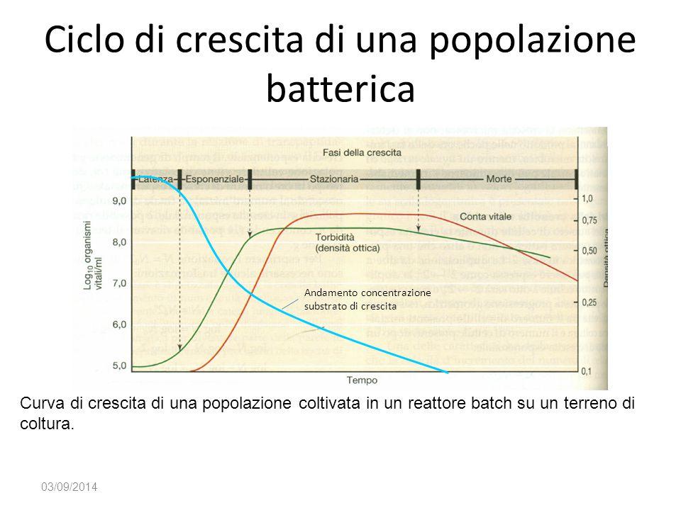 Ciclo di crescita di una popolazione batterica 03/09/2014 Curva di crescita di una popolazione coltivata in un reattore batch su un terreno di coltura