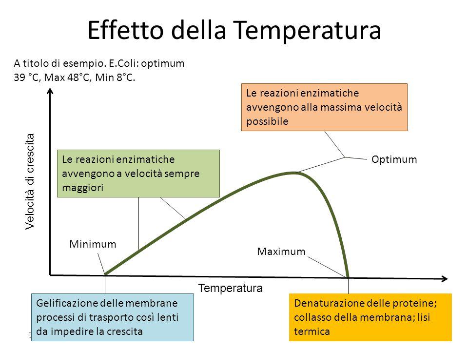 Effetto della Temperatura 03/09/2014 Temperatura Velocità di crescita Minimum Maximum Optimum Le reazioni enzimatiche avvengono a velocità sempre magg