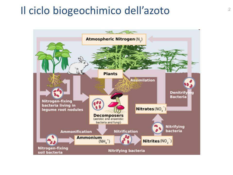 Il ciclo biogeochimico dell'azoto 2
