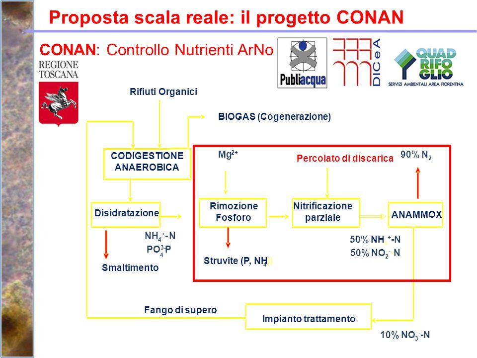 Proposta scala reale: il progetto CONAN CONAN: Controllo Nutrienti ArNo CODIGESTIONE ANAEROBICA Disidratazione Rimozione Fosforo Nitrificazione parzia