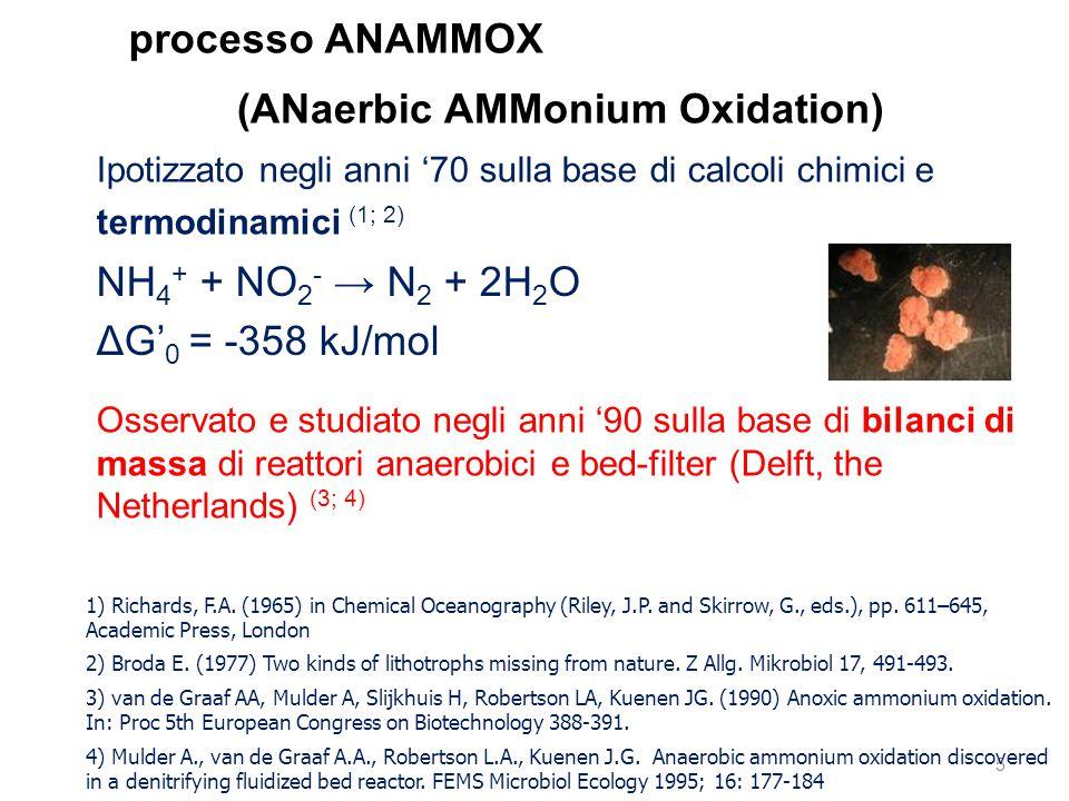 5 (ANaerbic AMMonium Oxidation) NH 4 + + NO 2 - → N 2 + 2H 2 O ΔG' 0 = -358 kJ/mol Ipotizzato negli anni '70 sulla base di calcoli chimici e termodina