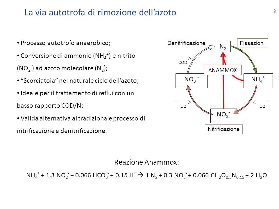 La via autotrofa di rimozione dell'azoto 9 DenitrificazioneFissazion e Nitrificazione N2N2 NH 4 + NO 2 - NO 3 - ANAMMOX COD O2 Processo autotrofo anae