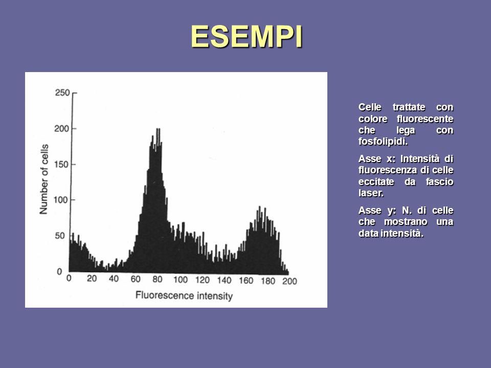 ESEMPI Celle trattate con colore fluorescente che lega con fosfolipidi. Asse x: Intensità di fluorescenza di celle eccitate da fascio laser. Asse y: N
