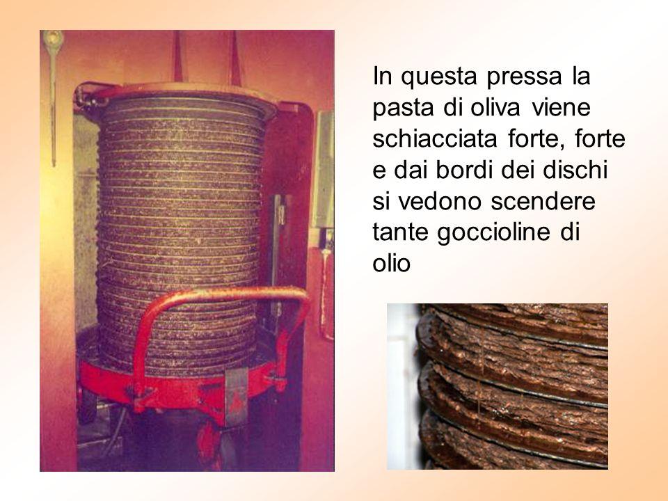 In questa pressa la pasta di oliva viene schiacciata forte, forte e dai bordi dei dischi si vedono scendere tante goccioline di olio