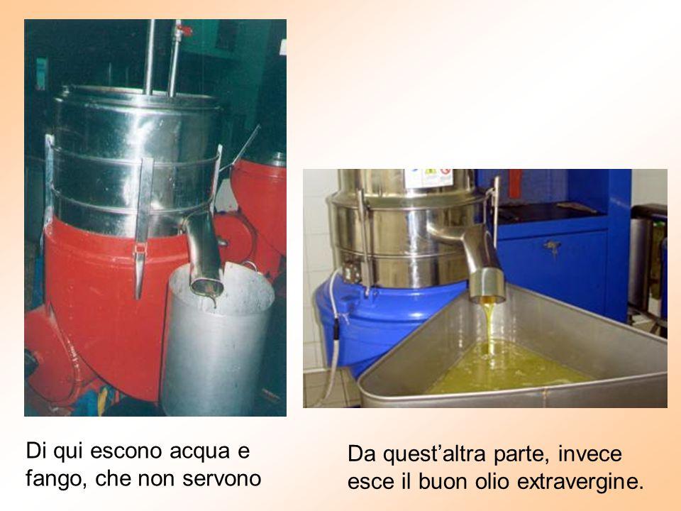 Di qui escono acqua e fango, che non servono Da quest'altra parte, invece esce il buon olio extravergine.