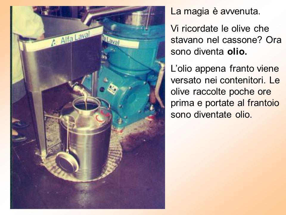 La magia è avvenuta. Vi ricordate le olive che stavano nel cassone? Ora sono diventa olio. L'olio appena franto viene versato nei contenitori. Le oliv