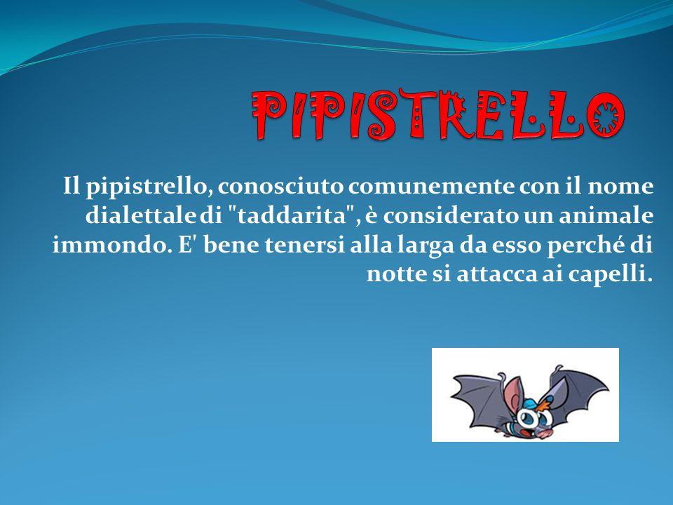 Il pipistrello, conosciuto comunemente con il nome dialettale di